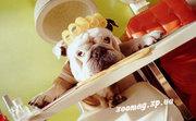 Стрижка  собак и кошек Запорожье недорого