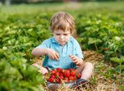 Саженцы клубники и земляники садовой